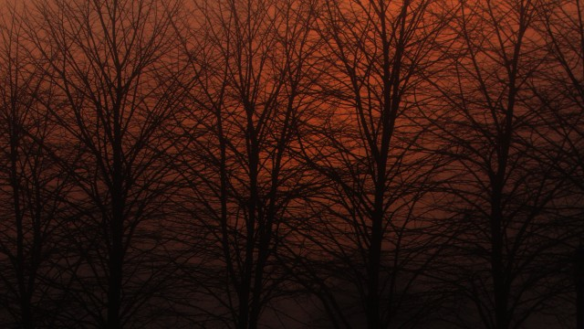 Boyd Trees at Sunset
